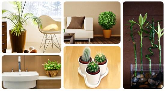 plantas_decorar_tu_hogar