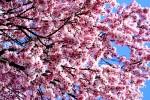Ciudades libres de alergias gracias a edificios que eliminan el polen
