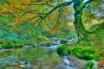 Recorre los cinco mejores bosques españoles esta primavera