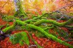 El hechizo otoñal de la selva de Irati