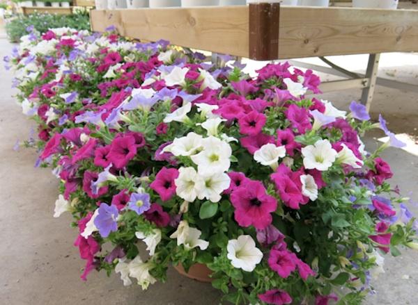 Las Mejores Plantas Para Terrazas Con Solel Blog De Haya