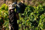 El vino marca la identidad de las regiones vitivinícolas de España