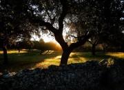 guillena puesta de sol