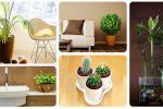 Plantas idóneas para tu hogar