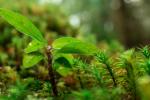 ¿Eres responsable con el medio ambiente? Descúbrelo a través de este sencillo test